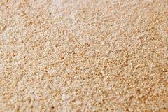 piwny drożdży Fotografia Stock