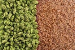 Piwny tło z mieszanką chmielowy i pszeniczny wierzchołek widok zdjęcia stock