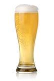 piwny zimny świeży szklany złoty Obraz Stock