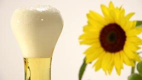 Piwo i słonecznik zbiory wideo