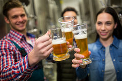 Piwowarowie wznosi toast piwa przy browar fabryką Zdjęcie Royalty Free