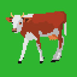 Pixel cow. Pixel art vector illustration of dairy cow Stock Photography
