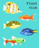Pixel exotic fish. Isolated on a bright background. For games and mobile applications Royalty Free Stock Photos