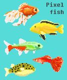 Pixel exotic fish. Isolated on a bright background. For games and mobile applications Stock Photos