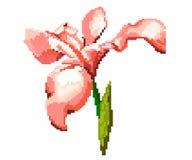 Iris on a white background. Pixel illustration of the flower. royalty free illustration