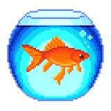 Pixel goldfish in fishbowl  vector Stock Images
