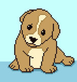 Pixel Puppy Stock Photos