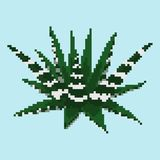 Pixel succulent haworthia Royalty Free Stock Images