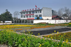 Pixian, China: Flower Nursery & Community Center. Flower nurseries with colourful annuals including poppies, marigolds, and strawflowers is located next to a Stock Photos