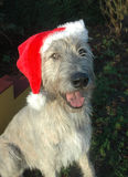 Pixie Dog Images stock