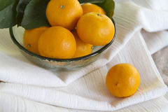 Pixie Tangerines Royalty Free Stock Images