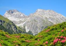 Piz Ela i Schweiz fjällängar Arkivbild