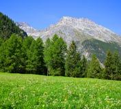 Piz Ela nelle alpi della Svizzera - cantone Graubunden Fotografia Stock
