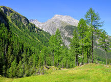 Piz Ela w Szwajcaria Alps Zdjęcie Stock