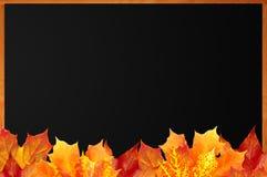 Pizarra en blanco con las hojas de arce de madera del marco y del otoño Fotos de archivo libres de regalías