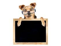 Pizarra en blanco de los vidrios divertidos del perro aislada Imagenes de archivo