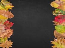 Pizarra vacía para la bandera de la postal del diseño de la acción de gracias con las hojas Imagen de archivo