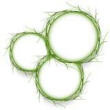 Pizca abstracta del vector del marco del círculo de la hierba verde ilustración del vector