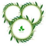 Pizca abstracta del vector del marco del círculo de la hierba verde stock de ilustración