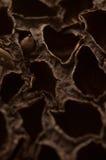 Pizca seca de la fruta una semilla dentro Imagen de archivo libre de regalías