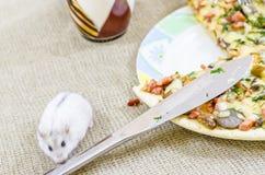 Pizza, alimento, cogumelo, queijo, petisco, gourmet, pastelaria Imagens de Stock Royalty Free