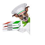 Pizza delivery dog. With a stack of pizza boxes behind a blank placard Stock Photos