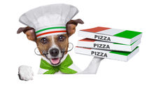 Pizza delivery dog. With a stack of pizza boxes on a blank placard Stock Photography