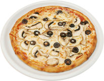 Pizza Fungi  with tomatoes cheese  and mushrooms Royalty Free Stock Photo