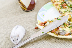 Pizza mat, champinjon, ost, mellanmål, gourmet, bakelse Royaltyfria Bilder