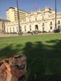 Pizza no palácio fotos de stock royalty free