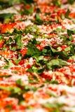 Pizzanärbild Arkivfoto