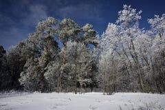 Pizzi della neve Fotografie Stock