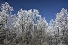 Pizzi della neve Immagine Stock
