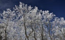 Pizzi della neve Fotografia Stock