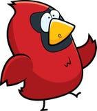 Pájaro cardinal Imágenes de archivo libres de regalías