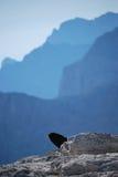 Pájaro curioso Fotografía de archivo libre de regalías