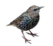 Pájaro curioso Foto de archivo