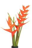 Pájaro de las flores de paraíso Fotografía de archivo libre de regalías