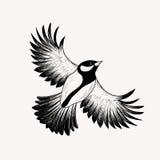 Pájaro de vuelo del bosquejo Ilustración drenada mano del vector inglés Foto de archivo libre de regalías