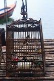 Pájaro del canto en una jaula Imagenes de archivo