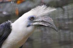 Pájaro del pelo blanco Imágenes de archivo libres de regalías