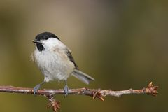 Pájaro en la ramificación Fotos de archivo libres de regalías