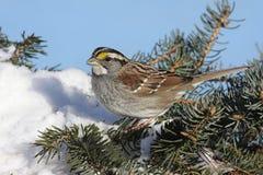 Pájaro en nieve Foto de archivo