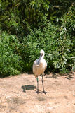 Pájaro en parque zoológico Imagen de archivo libre de regalías