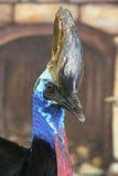 Pájaro grande Fotografía de archivo