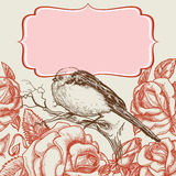 Pájaro y rosas Imágenes de archivo libres de regalías