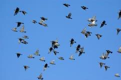 Pájaros Foto de archivo