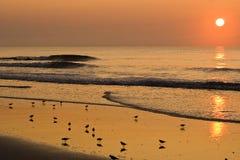 Pájaros de desatención en la playa en la salida del sol Fotografía de archivo