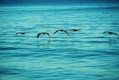 Pájaros de mar Imágenes de archivo libres de regalías