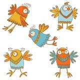 Pájaros de ?ute Fotos de archivo libres de regalías